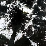 2015 樹冠・下和田の森