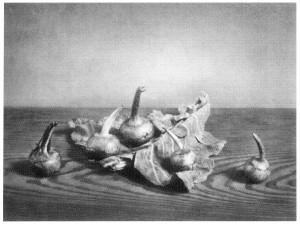 野島康三「慈姑の図」